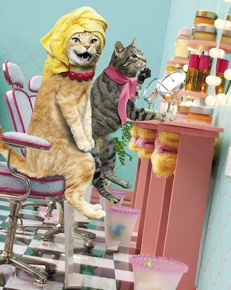 парикмахерская открытки с котом получается