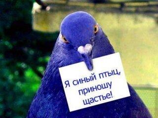 """Поздравление: """"Птицы счастья"""""""