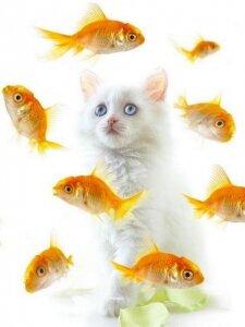 Поздравления от золотой рыбки